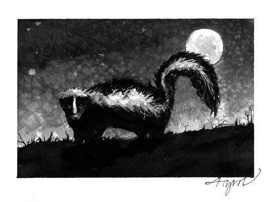 TOS_Skunk_at_night