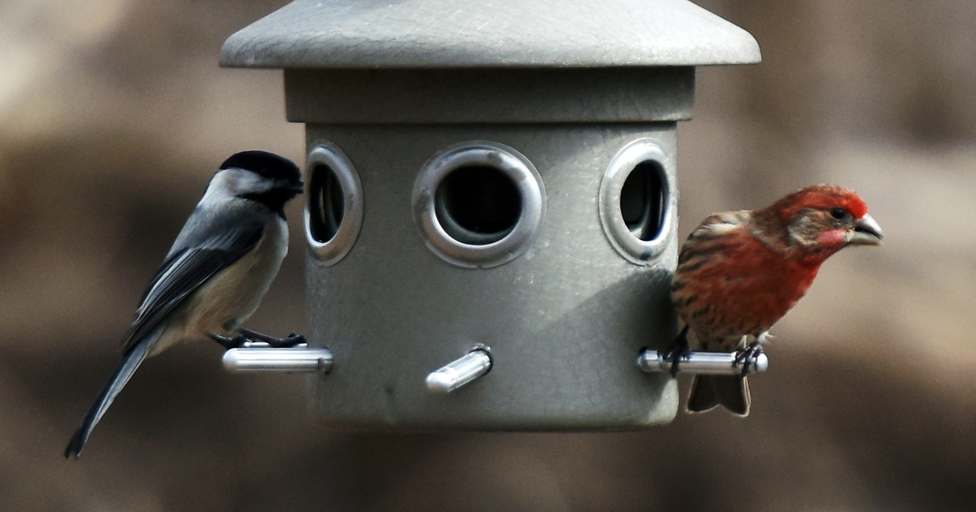 Bergen County Audubon hosts Great Backyard Bird Count