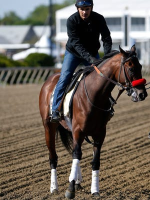 May 16, 2016; Baltimore, MD, USA; Kentucky Derby winner Nyquist walks on the track during a training session for the 141st Preakness Stakes at Pimlico Race Course. Mandatory Credit: Geoff Burke-USA TODAY Sports