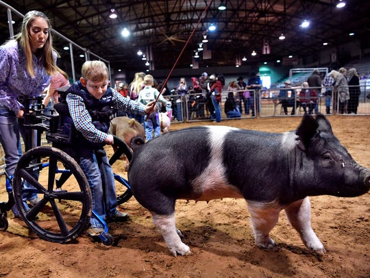Crayton Rains, 5, shows a Hampshire pig with the assistance