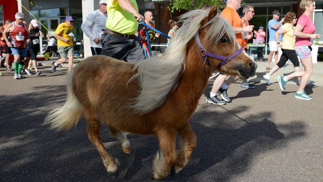 Troy Huffman runs with Adam Golden Shoes, a miniature horse, at the start of Redemption Road Rescue's 2nd annual Cowboy Canter 5k run at the LIFT Wellness Center in Jackson, Tenn., on Saturday, April 15, 2017.