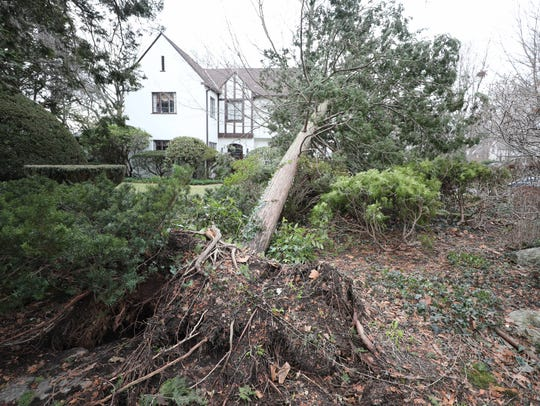 One of the trees that were uprooted that came down on Chris Moroney's property in Yonkers during the nor'easter, pictured March 3, 2018. Fortunately, the tree missed his home.