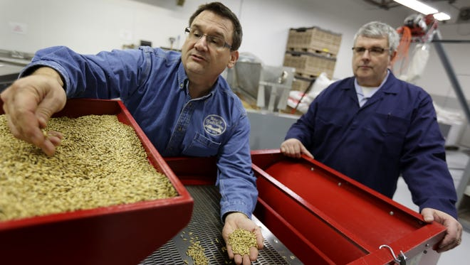 Tom Laboda, left and Dan Bailey founders of MotorCity MaltHouse sort malt at their facilities in Shelby Township on Monday, Dec. 21, 2015.