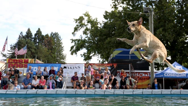 See the X-Treme Air Dogs perform, plus demonstrations of Frisbee dogs, herding dogs, tricks dogs and working K-9s in Dog Town at the Oregon State Fair.