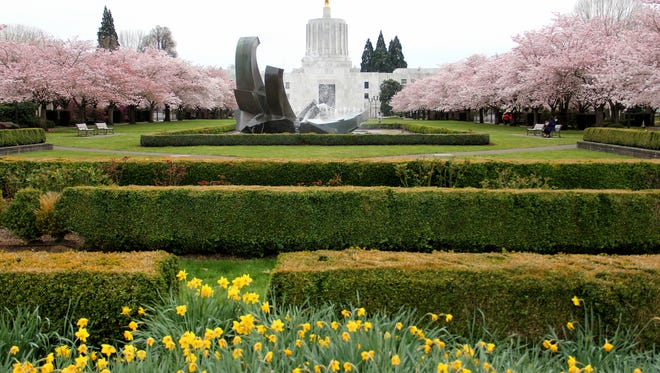 Cherry blossom trees in bloom at the Oregon Capitol Mall in Salem on Tuesday, March 10, 2015.
