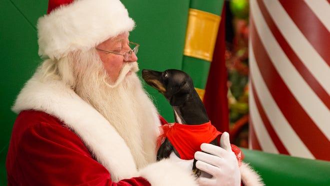 Daphne looks up at Santa during pet night at La Palmera Mall on Monday Nov. 14, 2016.