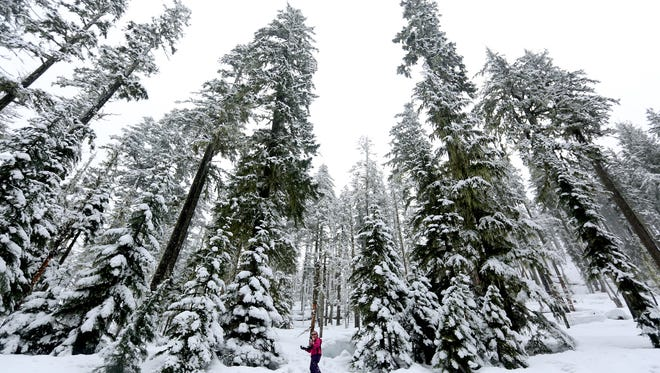 ABOVE: Abigayle Cook, 8, of Lebanon, plays in the snow at the Potato Hill Sno-Park at Santiam Pass in Oregon on Sunday. ANNA REED / Statesman Journal Abigayle Cook, 8, of Lebanon, plays in the snow at the Potato Hill Sno-Park at Santiam Pass in Oregon on Sunday, Jan. 24, 2016. The snow depth is 48 inches in the pass for Sunday.