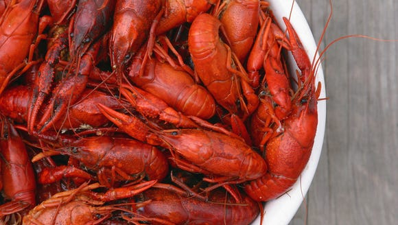 Bowl of fresh hot boiled Louisiana crawfish viewed