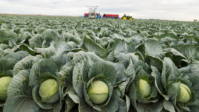 A recent report says Arizona's exports, including vegetables, would be vulnerable if NAFTA was repealed.