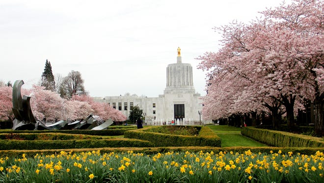 The cherry blossom trees are in bloom at the Oregon Capitol Mall in Salem on Tuesday, March 10, 2015.