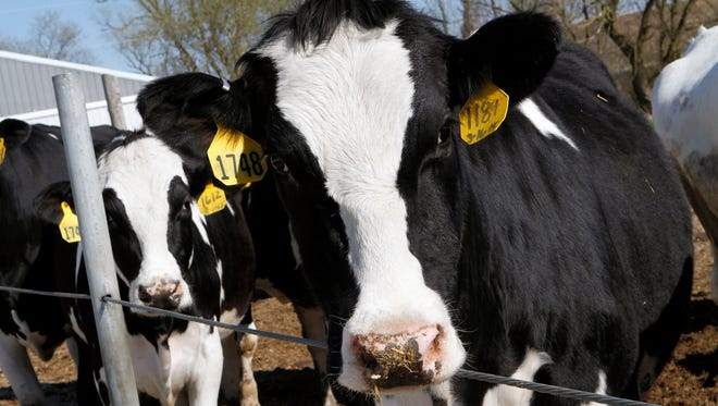 Cow College is a series of educational programs offered three consecutiveTuesdays in January 8, 15 and 22.