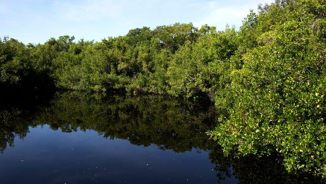Wetlands cover the south Florida landscape.