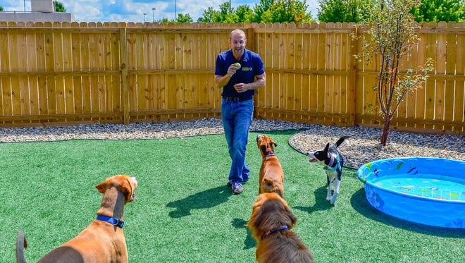 Paul Whitehurst playing with some of the guests at Pooch Palace, dog resort and training center. located on 35 Beck Lane Suite 101, Lafayette IN