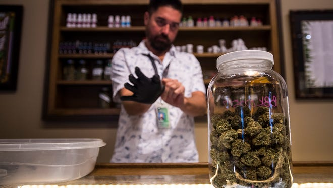 Director of sales and marketing Maka Kala'i puts of gloves before handling cannabis behind the counter, Wednesday, August 23, 2017, at Organic Alternatives in Old Town Fort Collins, Colo.
