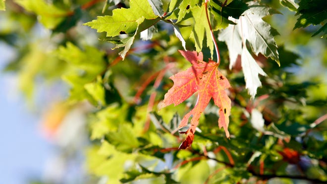 Experts predict recent weather conditions in Wisconsin could mean fall colors will be less vibrant.