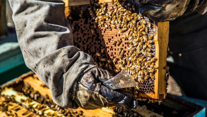 Sam Wustner of the Wustner Brothers Honey in Missoula, Montana, checks the honey comb in one of his hives in the Miller Creek area southwest of town on Sept. 26, 2017. Wustner says this year's wildfire season was particularly rough on the Brothers' hives. (Kurt Wilson /The Missoulian via AP)