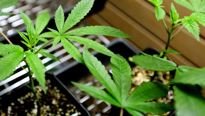 The Arizona Court of Appeals has ruled that medical cannabis extracts, also called hashish, do not fall under the Arizona Medical Marijuana Act and can no longer be sold in dispensaries.