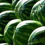 Kansas farm grows watermelons amid corn and milo season
