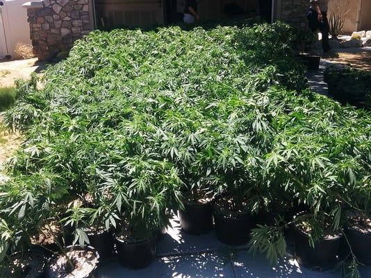 636384227910230184-Marijuana1.jpg