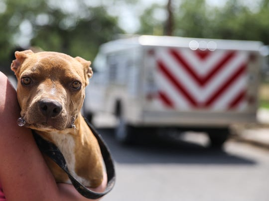 A resident carries a surrendered dog toward the Animal Control truck Monday, June 19.