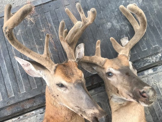 636372860754490573-deer-poaching2.jpg