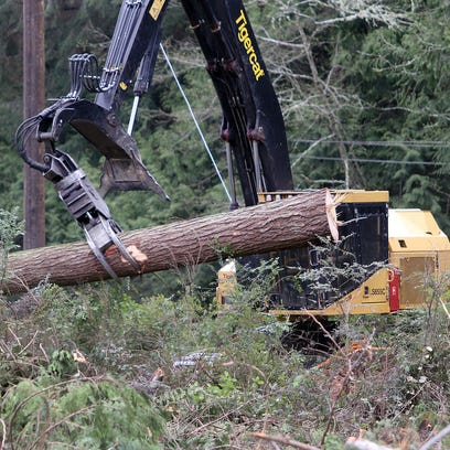 Tree faller Arthur Marty of Carnation moves on to cut