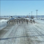 South Dakota man takes video as he shares road with dozens of antelope