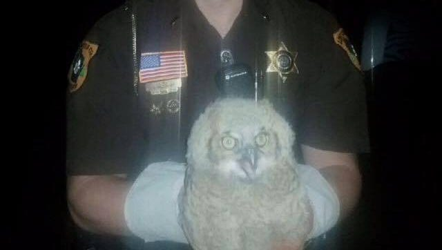 Lt. Andy Vanderwyst holds one of two great horned owls rescued Saturday evening in the town of Merrill.