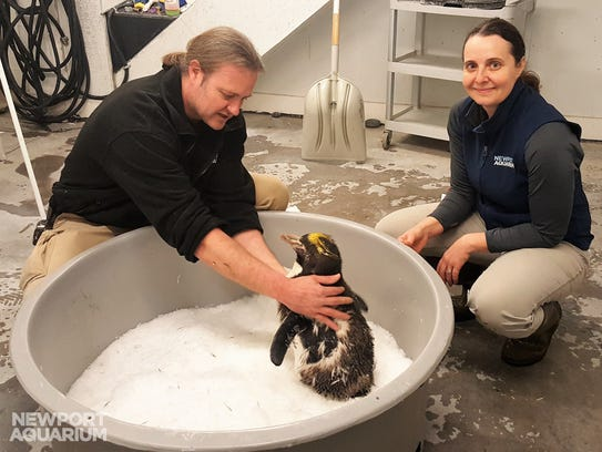 Newport Aquarium animal care experts with Victoria