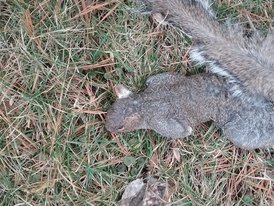 More than 20 squirrels have been found dead in the