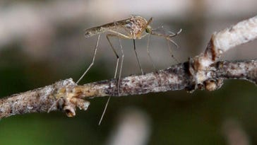 First West Nile activity of 2017 detected in Mich.