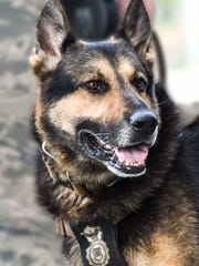 A military working dog Rick has been retired and reunited