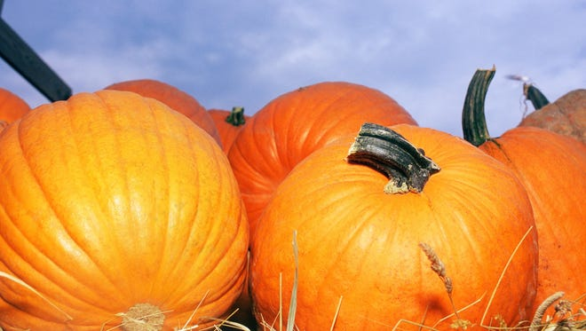 There are plenty of Fall festivals and events to keep everyone in the family entertained.
