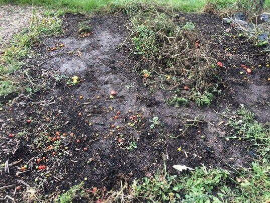 636416750823565889-09-24-2017-Fall-garden-cleanup.JPG