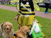 Seven Days Out: Next week goes to the dogs with Barktoberfest and more