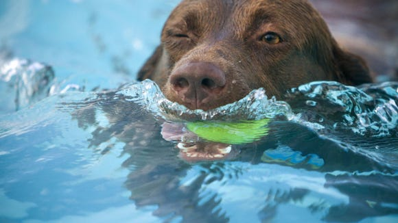 The annual Doggie Dip is Sept. 5.