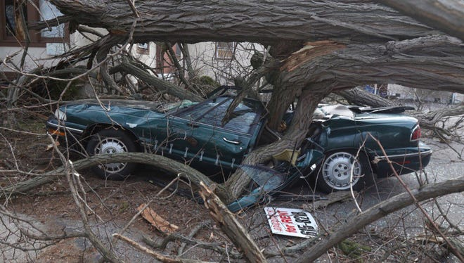 Car is crushed by fallen tree. Thankfully, no one was in it at the time.