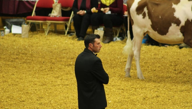 Judges carefully observe dairy animals circling the ring during one of many breed shows at World Dairy Expo.
