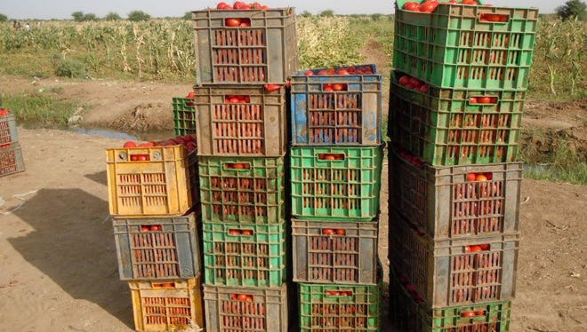 Crates of tomatoes in Nepal awaiting shipment.