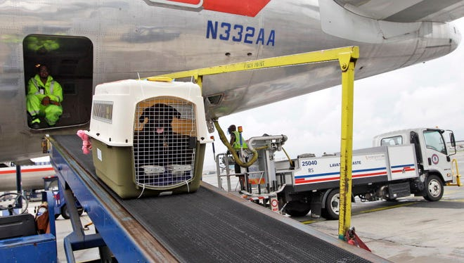American Airlines ground crew unloads a dog from the cargo area of an arriving flight at JFK International airport in New York on Aug. 1, 2012.