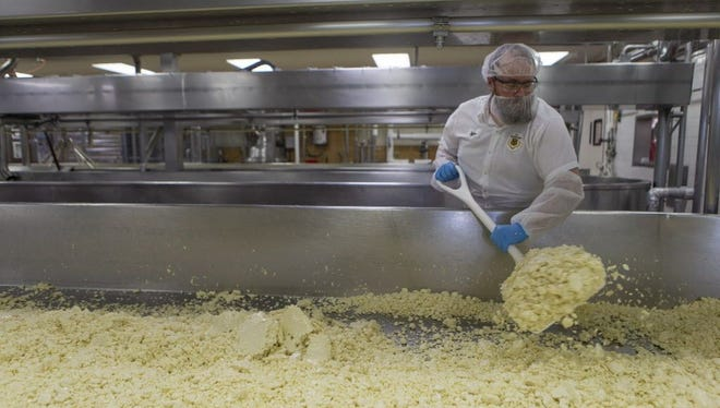 Mike Sobolik, a cheesemaker at Sartori Cheese Company in Plymouth, shovels cheese curds to the end of a cheese table. Water is slowly drained from the table as the cheese is stirred and salt is added.