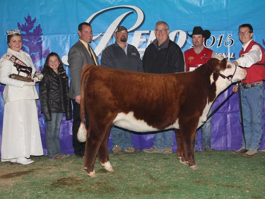 In the horned female show, grand and champion junior