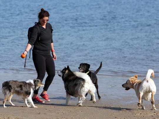 Dogs are allowed to run free on Playland Beach until April 28.