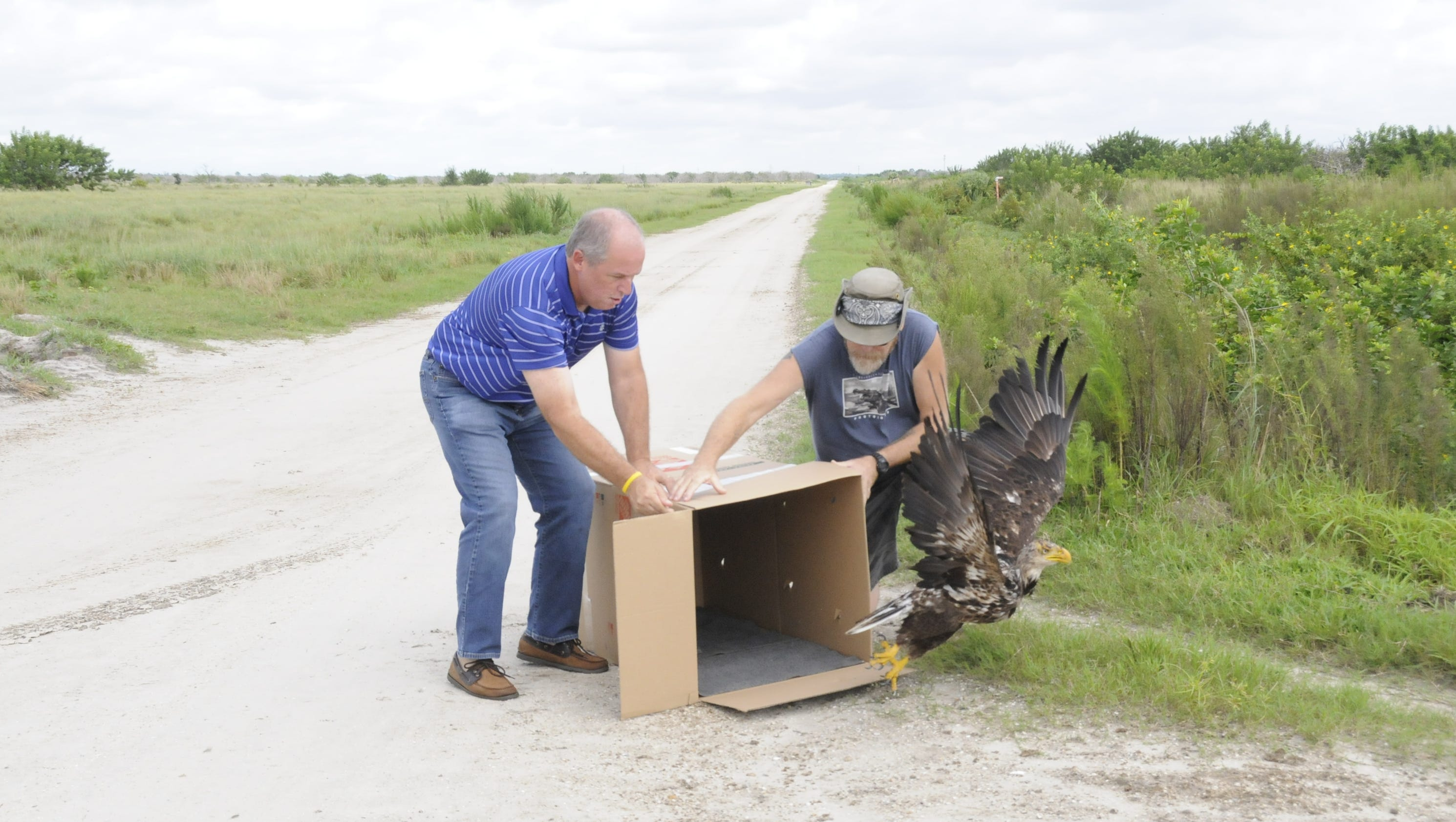 rehabilitated bald eagle released in palm city