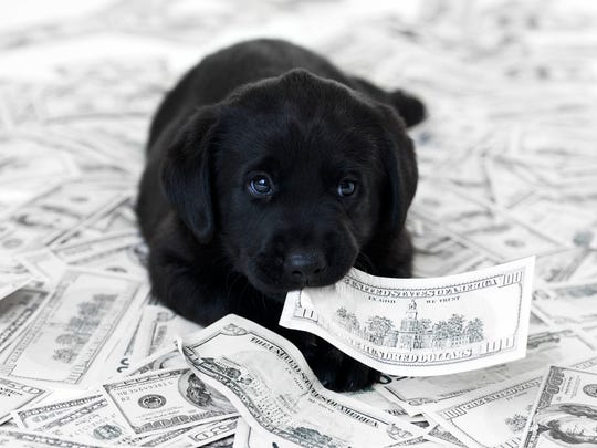 Beware the hidden costs of pet ownership