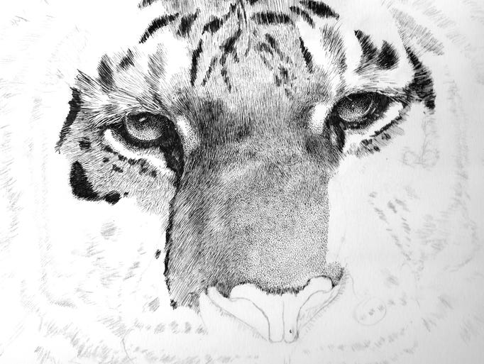 Tiger in pen and ink, shown in progress by Eric Ray.