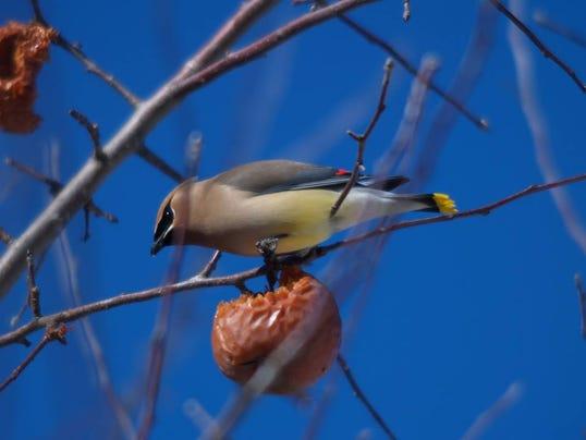 jimk bird photo.jpg