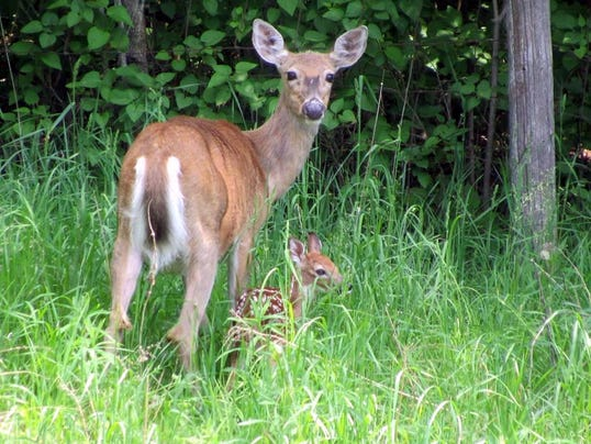 What does return of chronic wasting disease mean for us?
