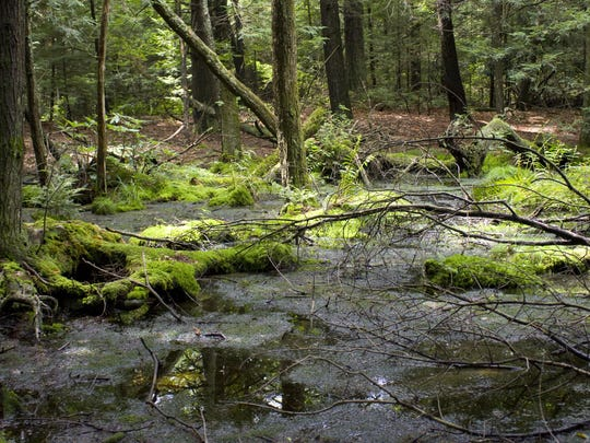 Hickory Run State Park's wetland bog.