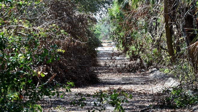 North side of the Jungle Trail along County Road 510 as seen on Thursday, Sept. 28, 2017, in Indian River County. Fallen trees and tree branch debris block the roadway. Barricades have been installed blocking traffic along the Jungle Trail at the north side of County Road 510 and A1A intersections.